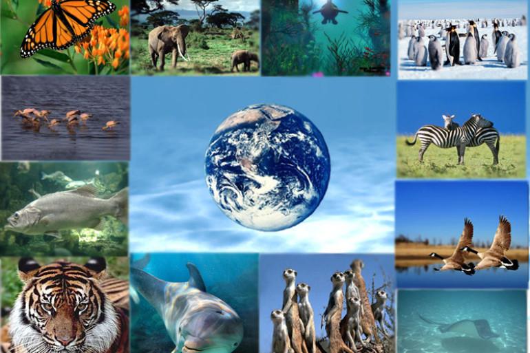 Le développement durable – N° 2 La biodiversité